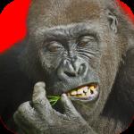 Flying Gorilla 2.122 (Mod)