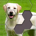 Hexa Jigsaw Puzzle ® 32.01 (Mod)