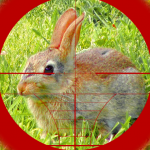 Sniper Rabbit Hunting 3D 1.6 (Mod)