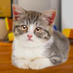 Talking Cat Funny 1.96 (Mod)