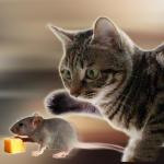 Talking Reality Cat 1.33 (Mod)