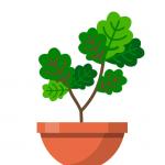 Terrarium Garden Idle  1.26.4 (Mod)