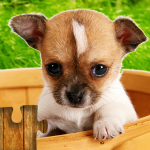 Dogs Jigsaw Puzzles Game – For Kids & Adults 🐶 25.1 (Mod)