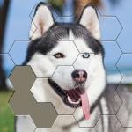 Jigsaw Hexa Block 1.0.6 (Mod)