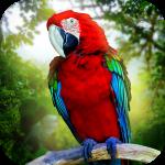 Jungle Parrot Simulator – try wild bird survival! 1.3 (Mod)