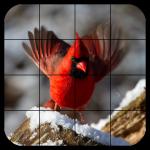Tile Puzzles · Birds 1.44.bi (Mod)