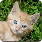 Cat Games Free Puzzles 5.26.026 (Mod)