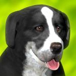 Dog Run 1.1.2 (Mod)