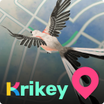 Krikey Create 3D Avatar + Play AR Games  3.10.2 (Mod)