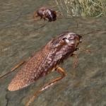 Cockroach Simulator – animal game 3.5 (Mod)