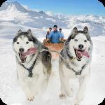 Snow Dog Sledding Transport Games: Winter Sports com.topwar.gp(Mod) 1.147.0