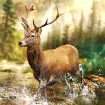 Hunting Clash Hunter Games – Shooting Simulator  2.34 (Mod)