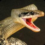 Anaconda Rampage: Giant Snake Attack 2.112  (Mod)