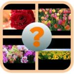 Guess Name Beautiful Flower 7.1.3z (Mod)