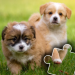 Dogs & Cats Puzzles for kids & toddlers 2 🐱🐩 2021.44 (Mod)