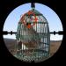 Partridge Hunter 10.1.0 (Mod)
