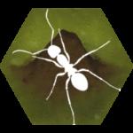 Finally Ants 2.49f1 (Mod)