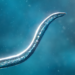Bionix – Spore & Bacteria Evolution Simulator 3D  (Mod)