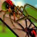 Spider Fight Simulator  (Mod)