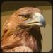 Eagle Hunting Journey  (Mod)