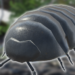 Roly-Poly Friends  (Mod)