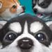 Cute Pocket Puppy 3D – Part 2  1.0.8.4 (Mod)
