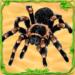 Spider Simulator: Life of Spider  (Mod)