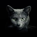 Find a Cat  (Mod)