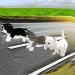 Kitten Cat Craft Racing:Cute Cat World Tournament  (Mod)